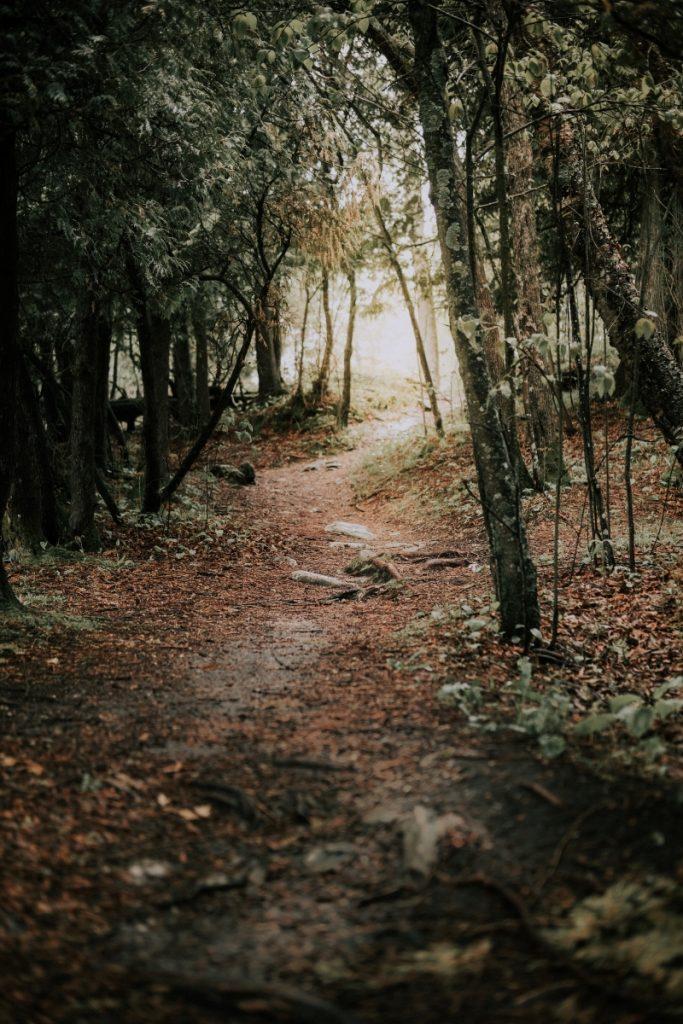 Door County Trail